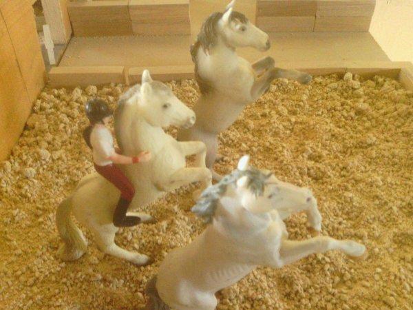 """"""" l vaut mieux se fier à un cheval sans bride qu'à un discours sans ordre """""""
