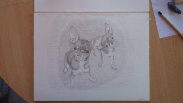 portrait de chihuahua au crayon graphite sur feuille toilé 40x30 cm