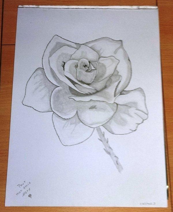 dessin d'une rose au crayon graphite sur feuille cartoné 36x27 cm