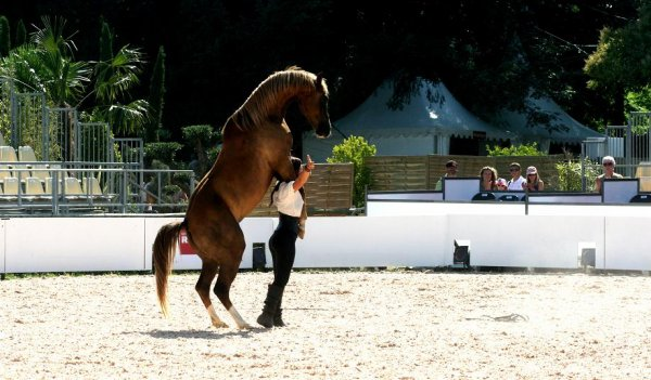 Equestria (Suite)