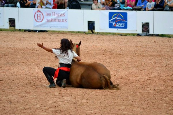 Equestria sélection dimanche