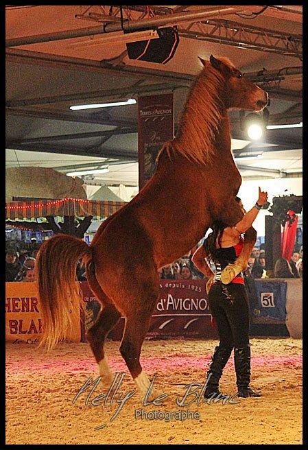 Cheval Passion, Avignon