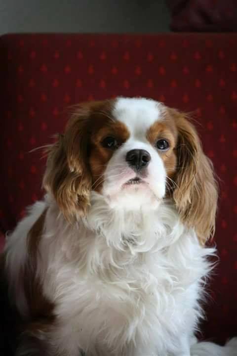 Mon chien (Beau)