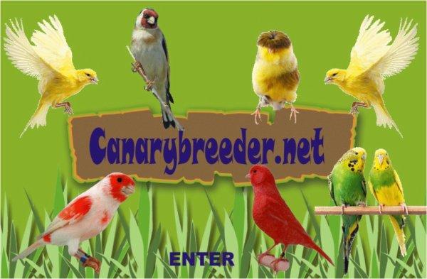 Canarybreeder.net