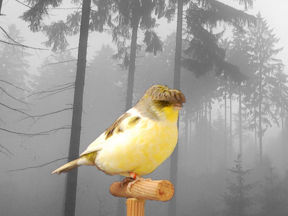 Blog von canarybreeder