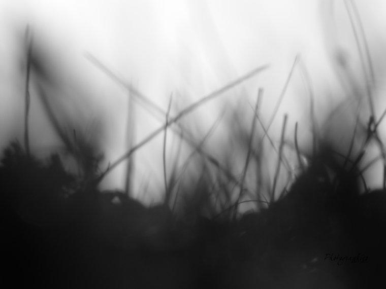 herbe ( effet )