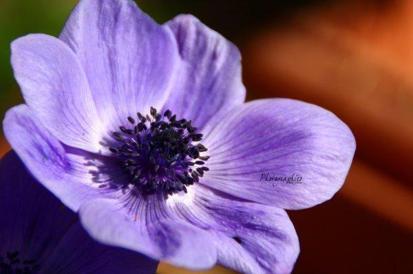 Les jolies couleurs du printemps