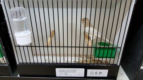 Tentoonstelling Verenigde Vogelvrienden Wommelgem 26-27/9/15