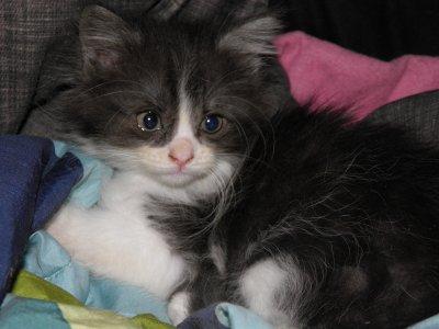 mon nouveau petit Chat elle s'appelle Nala