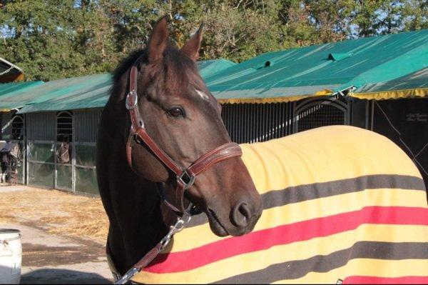Mon deuxième cheval