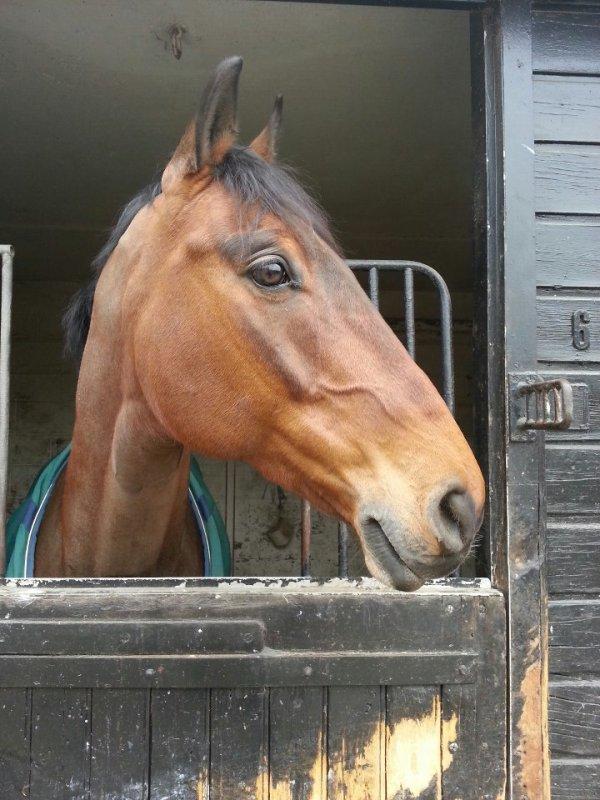 un de mes chevaux