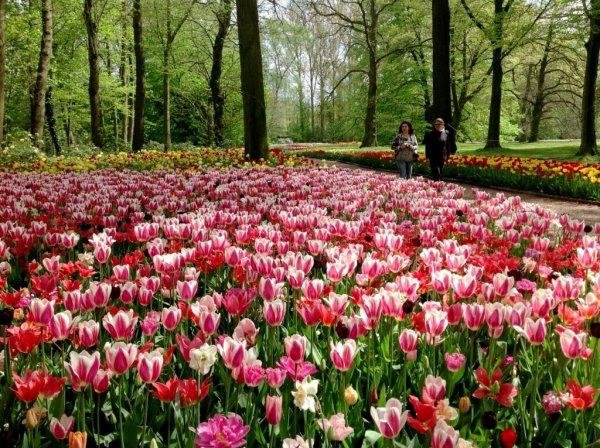 Floralia Brussels surprend pour la 12ème fois : du 3 avril au 3 mai 2015