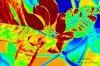 --  Psychédélique Flower  --