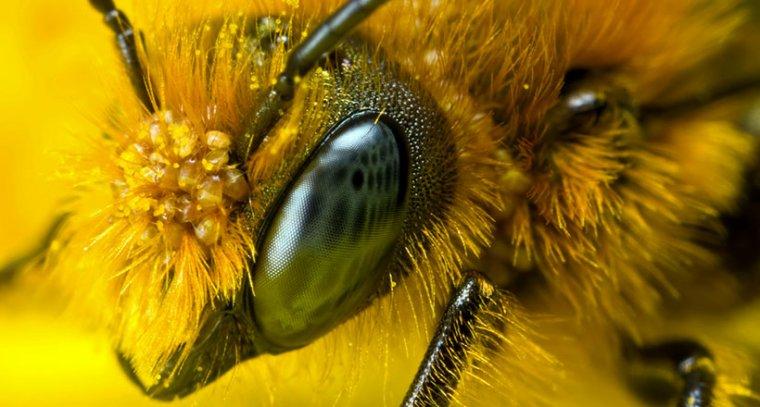 La disparition des abeilles provoquerait une 3ème guerre mondiale
