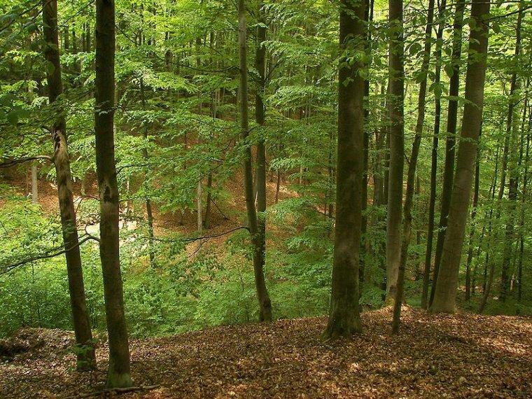 Les plantes ralentissent-elles le changement climatique ?