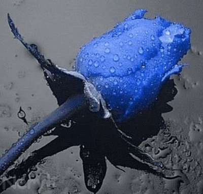 Deux magnifiques roses