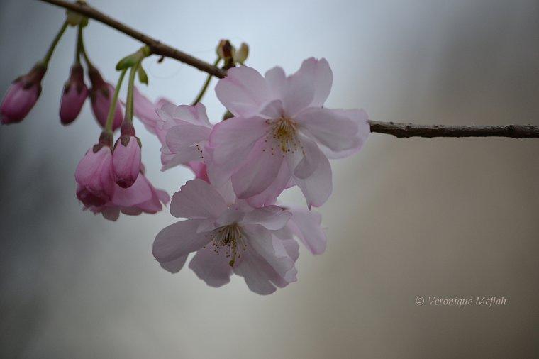Canal Saint-Martin : Le printemps s'installe !