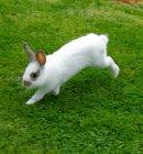 Photo de lapinos