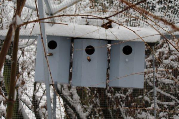 vue de quelques nids