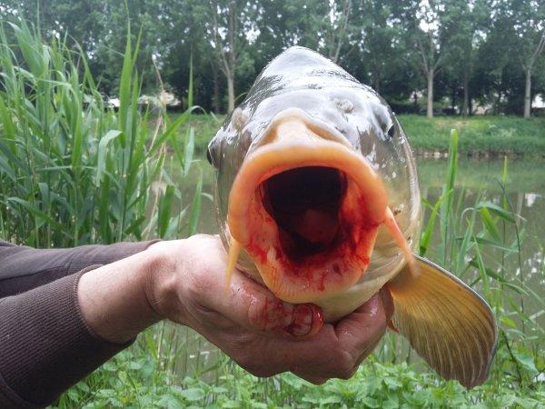 petit poisson très vivace et gourmand