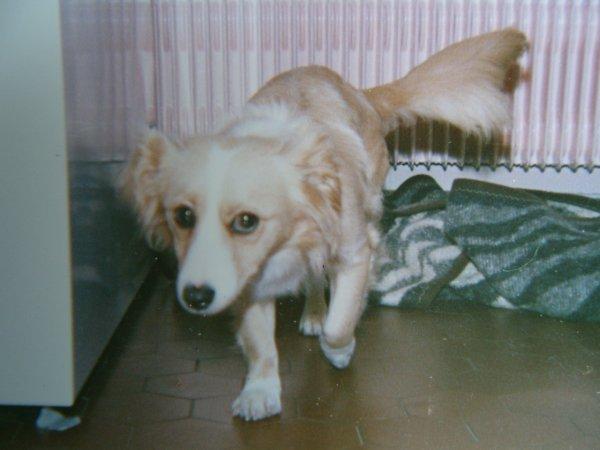 doune et éco mes chiens defunt vous me manquez