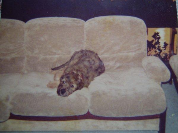 mon premier chien doudou