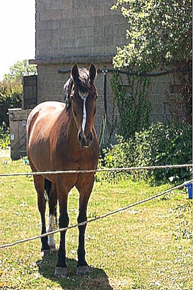 """""""Parce qu'au fond, les cavaliers passionés restent les gamins qui rêvent de leur poney.."""""""