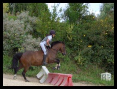 """""""Il n'y a pas de secret aussi intimes que ceux d'un cavalier et de son cheval. """" ♥"""