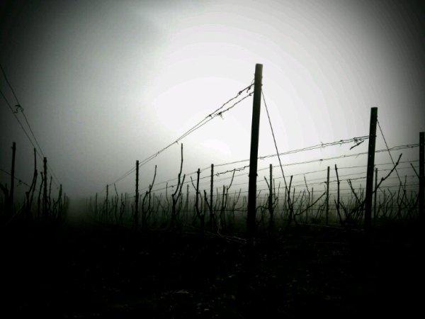 Voyage dans le brouillard