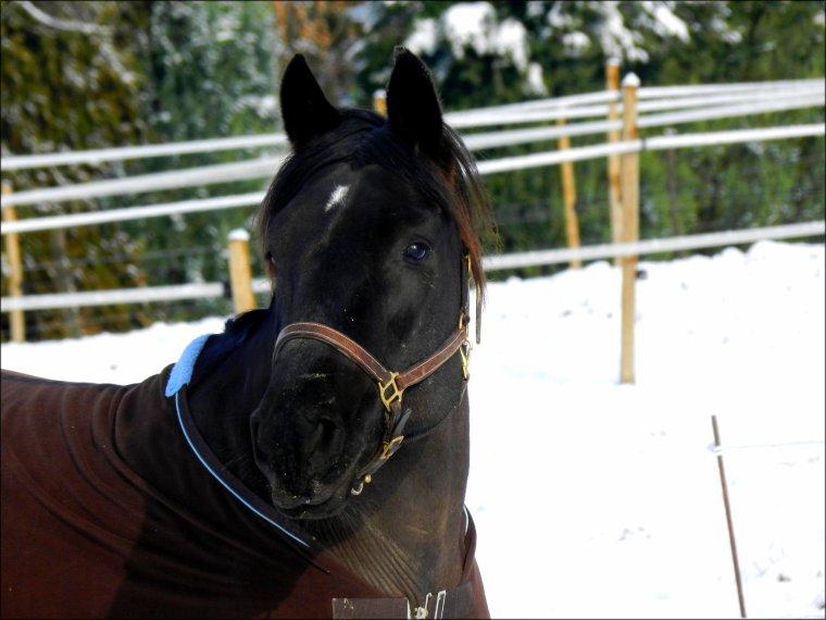 """""""Tout le monde croit que nous avons trouvé ce cheval mal en point et que nous l'avons soigné, mais c'est autre chose. Lui nous a guéri, chacun d'entre nous; et je crois que, d'une certaine manière, nous nous sommes guéri les uns les autres."""" Pur Sang, La Légende de Seabiscuit"""