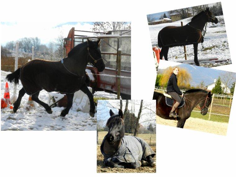 """""""Mon cheval est extrêmement poli: il a attend, pour faire tout ce qu'il sait déjà faire, que je sois capable de le lui demander!"""""""