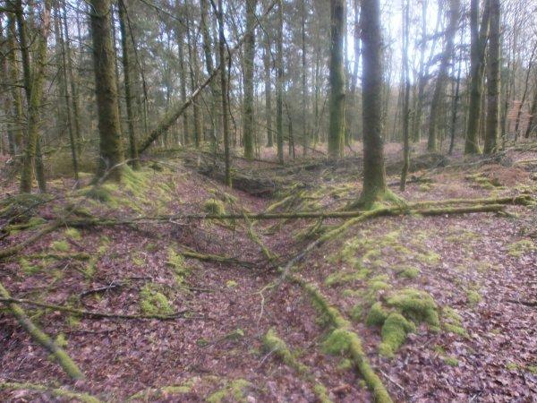 La Forêt des Andaines.
