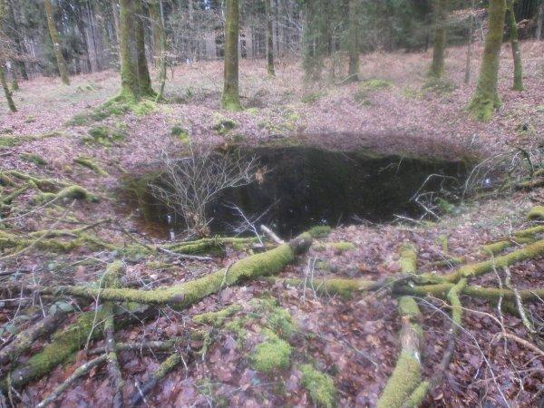 La Forêt des Andaines.  (suite)