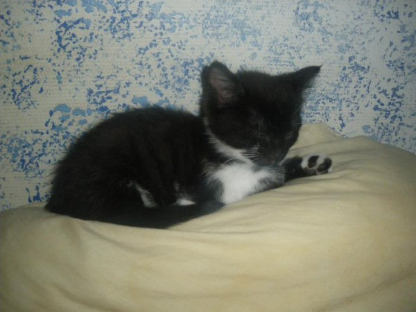notre chatte bébé  CHANCE