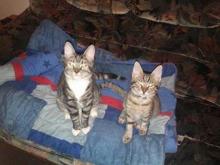 a gauche  notre chatte CALINE   et a droite notre CANABIS ( qui est décédé helas cest fait écrasé)