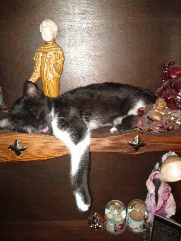 notre chatte bébé CHANCE  a la vie belle  hihihihi