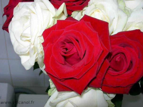 Rouge passion et blanc glaçon, pour une jolie harmonisation!!