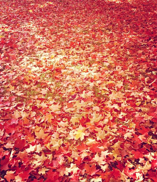 Rouge, orange et or. Est-ce le feu ou l'automne?
