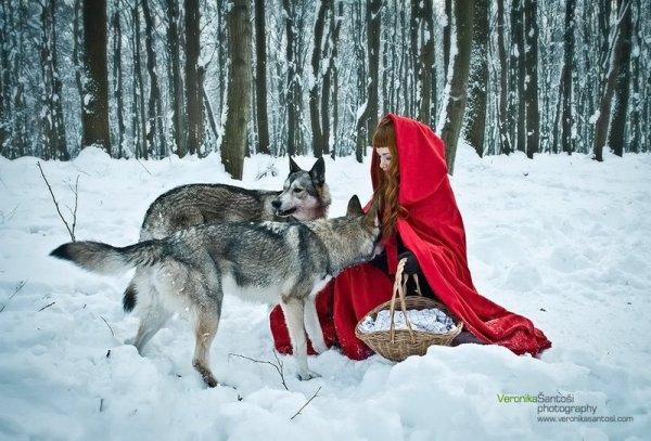 « Avant de négocier avec le loup, mets- lui une muselière. »
