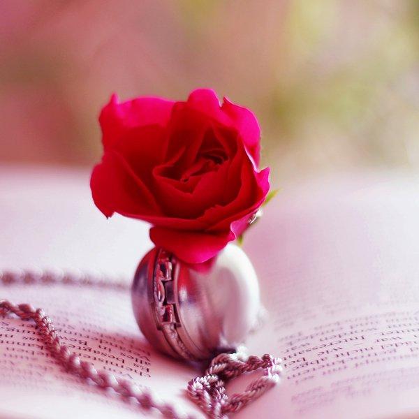« La richesse de la rose, c'est sa fragilité. »