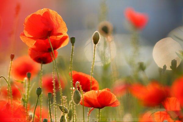 « Une fleur est un être entièrement poétique. »