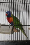 Photo de exposition-oiseaux24