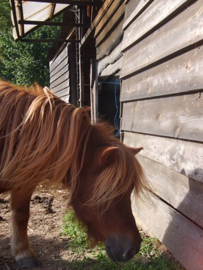 voici mon poney adorer jtm<3