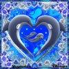 beau image dauphin