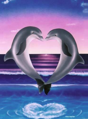 beau image 2 dauphin avec coeur