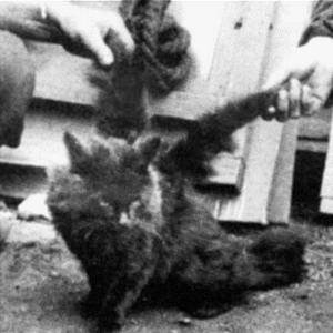 Article 4: Des chats avec des ailes? Ca existe!