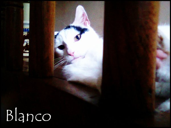 Blanco ♥