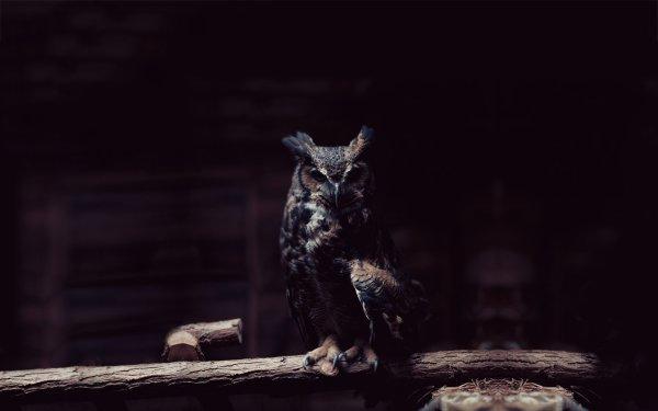 Dans la noirceur de la nuit