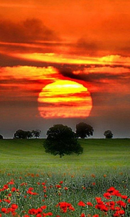 Solstice d'été - Les heures les plus longues...