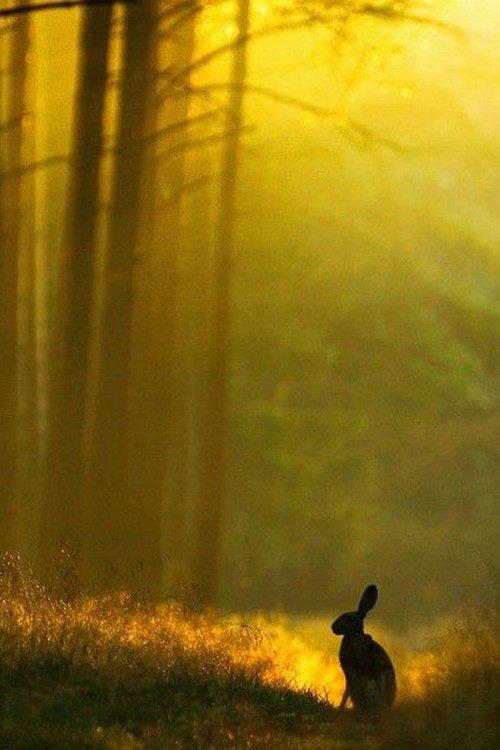 Oreilles levées dans la brume du petit matin